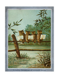 Center Warshaw Collection of Business Americana Series: A Quartette of 4 Owls on fence