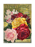Alneer Brothers Seed and Plant Catalogue  1898