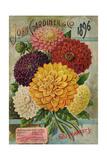 Seed Catalogues: John Gardiner and Co  Philadelphia  Pennsylvania Seed Annual  1896