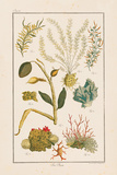 Sea Plants II