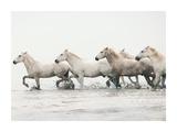White Horses II