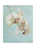 Aqua Floral I