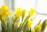 Leaning Daffodils