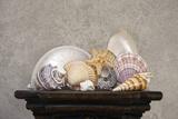 Seashell Still Life II Papier Photo par C. McNemar