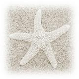 In the Sand V Papier Photo par Jim Christensen