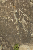 Roadrunner with a Snake and Other Jornada-Mogollon Petroglyphs at Three Rivers Site  New Mexico