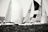 Race on the Chesapeake II