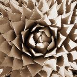 Desert Plants II Papier Photo par Bob Stefko