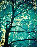 Soft Glow I