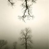 Tree Study IV