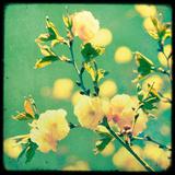Magnolia Mist Giclée par Irene Suchocki