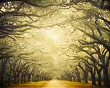 Avenue Shade I Giclée par Irene Suchocki