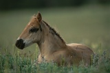A Close View of a Wild Colt Lying in a Field