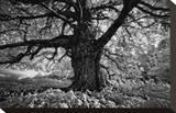 Portrait of a Tree  Study 10