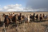 Horses Along the Highway Near Lakeside  NE