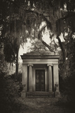 Spanish Moss-draped Tree Branches Hang Over a Mausoleum
