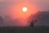 A Red Deer Buck  Cervus Elaphus  Silhouetted Against a Dramatic Sky