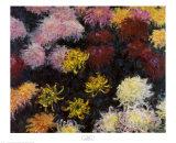 Chrysanthemum  1897