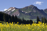Majestic Mountain Peaks Behind Evergreens and Yellow Wildflowers