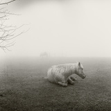 A Horse Resting in Heavy Fog Papier Photo par Stephen Alvarez