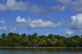 Coconut Palms Along the Shore of Samana Peninsula