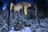 Sunlight on El Capitan and Snow Covered Evergreen Trees