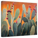 Rick Kersten 'Cactus Orange' Gallery Wrapped Canvas