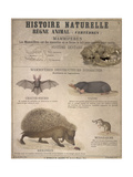 A Bat  Mole and Hedgehog
