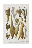 Assorted Game Including Rabbit  Duck  Snipe  Pigeon and Pheasants