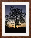 Tree at Sunset  South Africa