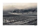 Spring Valley Mist