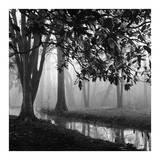Woodland No 1