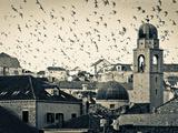 Croatia  Dalmatia  Dubrovnik  Old Town (Stari Grad)  Clock Tower Surrounded by Birds