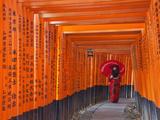 Japan  Kyoto  Fushimi Inari Taisha Shrine  Tunnel of Torii Gates