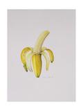 A Half-Peeled Banana  1997