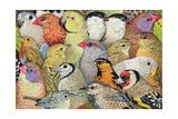 Patchwork-Birds  1995