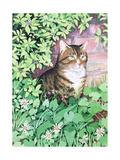 Jackie's Cat (Garden Design)