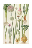 Onions and Other Vegetables