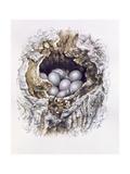 Bubo Bubo (Barn Owl)  2001