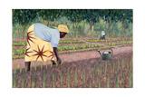 Planting Onions  2005