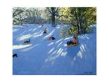 Early Snow  Darley Park  Derby