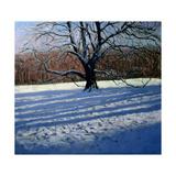 Large Tree  Snow  Calke Abbey