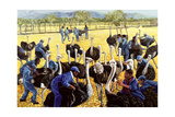 Ostrich Farm  1988