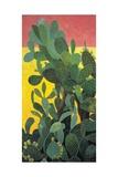 Nopal Cactus in Teotihuacan  2001