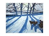 Sheep in Snow  Derbyshire
