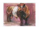 Zeus  Red Belted Galloway Bull  2006