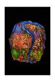 Garden of Eden, 2007 Giclée premium par Jane Deakin