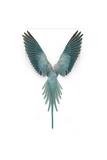Blue Ringneck Parrot