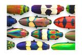 Jewel Beetles