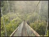 Swingbridge  Motu Falls  Motu  Gisborne  North Island  New Zealand  Pacific